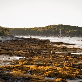 Low Tide - Bar Harbor
