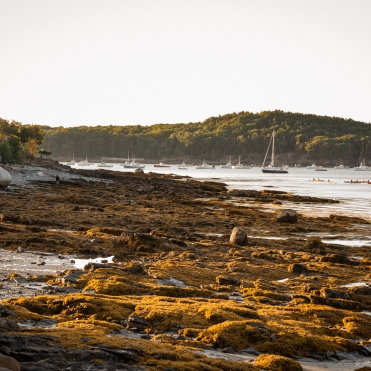Low Tide - Bar Harbor